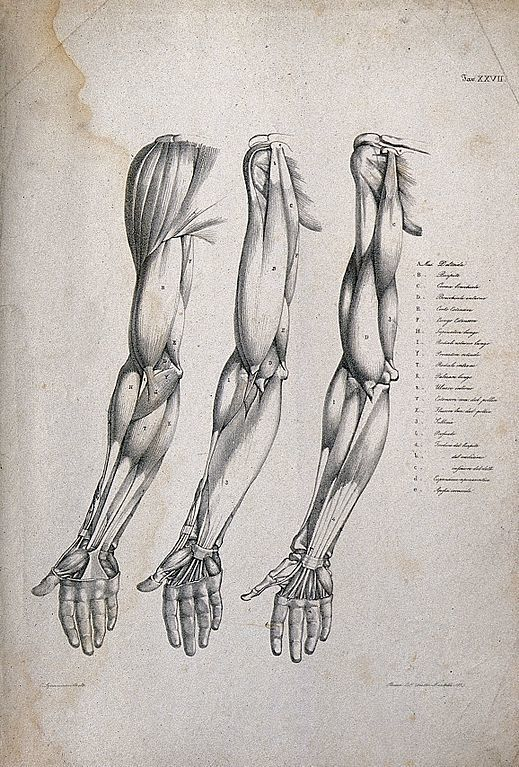 Human Body Sketch How To Make It Effectively