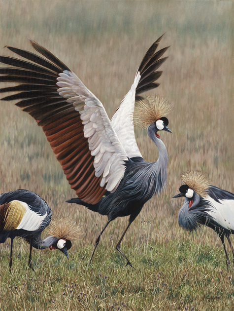 'Incroyables' - 40 x 30 - Oil on canvas - Crowned cranes